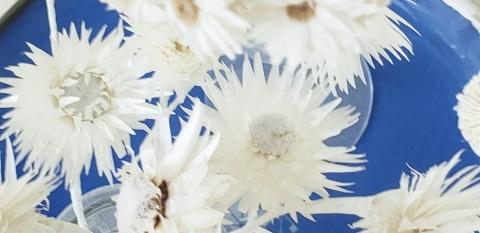 秋の母の日 花材その1_a0101801_08425205.jpg