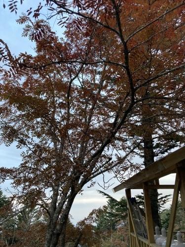 【10月22日更新】10月11月テント泊予約状況_c0369344_13501975.jpeg