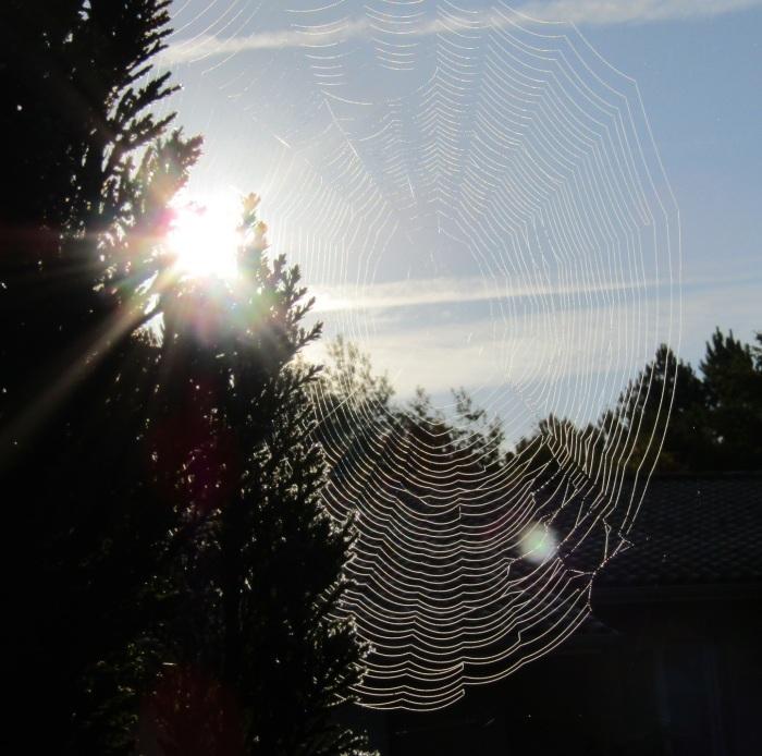 朝陽と蜘蛛の巣_b0287748_23142174.jpg