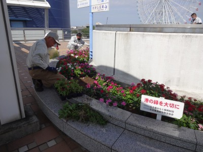 名古屋港水族館前花壇の植栽R2.10.7_d0338682_11033951.jpg