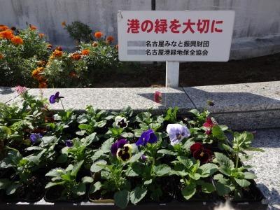 名古屋港水族館前花壇の植栽R2.10.7_d0338682_11064270.jpg