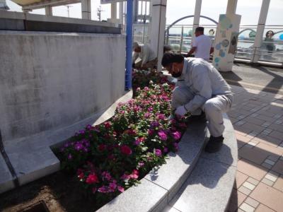 名古屋港水族館前花壇の植栽R2.10.7_d0338682_11080784.jpg