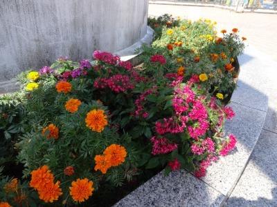 名古屋港水族館前花壇の植栽R2.10.7_d0338682_11090567.jpg