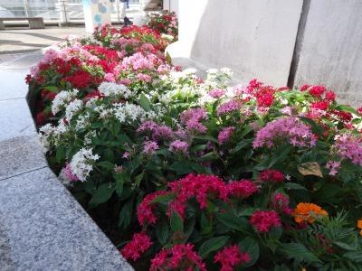 名古屋港水族館前花壇の植栽R2.10.7_d0338682_11091479.jpg