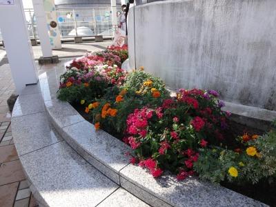 名古屋港水族館前花壇の植栽R2.10.7_d0338682_11100427.jpg