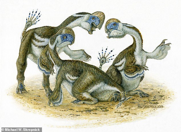 指の数が減る進化を示すオビラプトル類の新種化石論文_c0025115_22072762.jpg