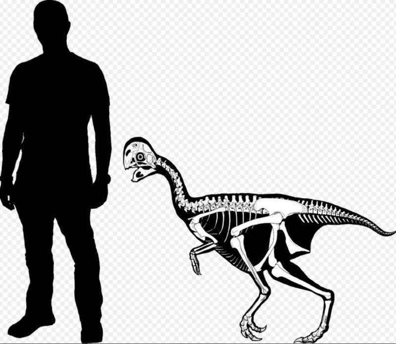 指の数が減る進化を示すオビラプトル類の新種化石論文_c0025115_22095573.jpg