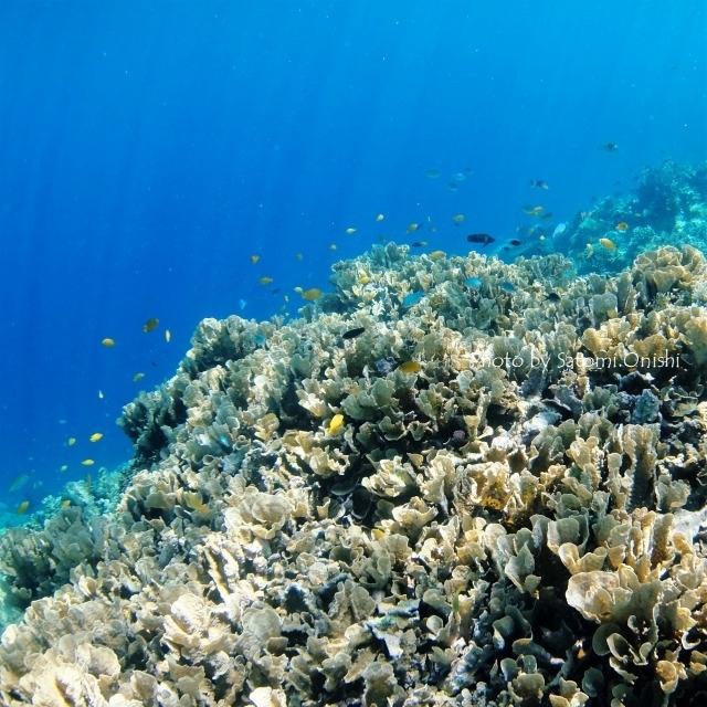 海の中は平和_c0211615_16455241.jpg