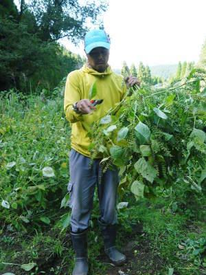 無農薬・無化学肥料で育てる「菊池水源産えごま」 令和2年産『白えごま』の収穫が完了しました!_a0254656_19225215.jpg
