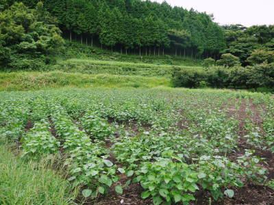 無農薬・無化学肥料で育てる「菊池水源産えごま」 令和2年産『白えごま』の収穫が完了しました!_a0254656_19290059.jpg