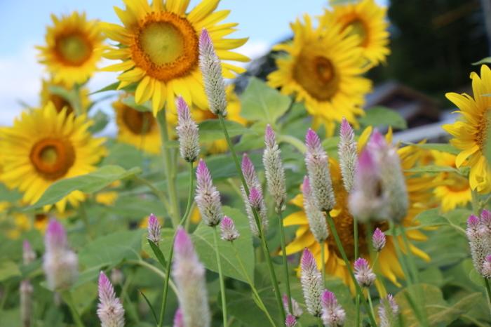 秋の花園_e0149891_09375432.jpg