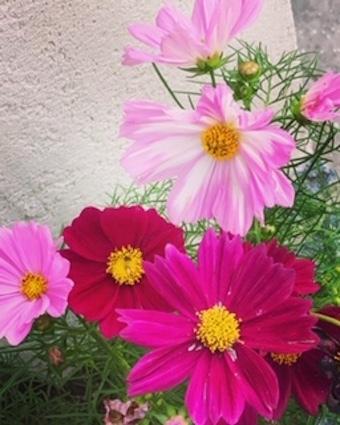 季節の花_f0061394_14223335.jpg