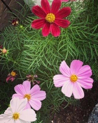 季節の花_f0061394_14225549.jpg