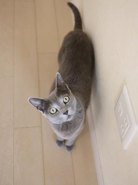 猫のお留守番 ルウちゃん編。_a0143140_18342746.jpg
