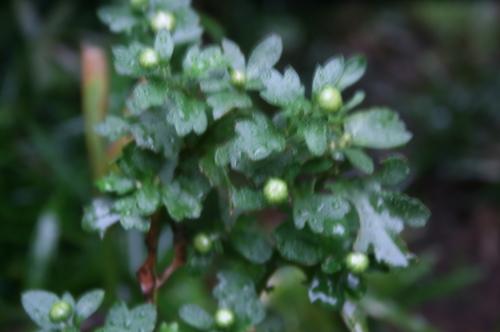 雨の中で、 小さきもの_e0082045_16010962.jpg