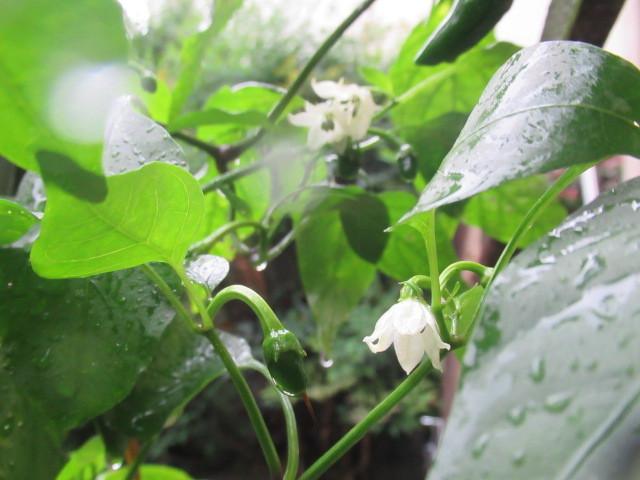 雨の中で、 小さきもの_e0082045_16071156.jpg