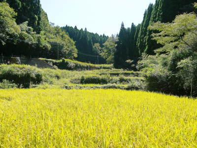 米作りの挑戦(2020) まもなく収穫!3年目の米作りは波乱もありながらなんとか順調?です!(前編)_a0254656_17065174.jpg