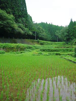 米作りの挑戦(2020) まもなく収穫!3年目の米作りは波乱もありながらなんとか順調?です!(前編)_a0254656_17524657.jpg