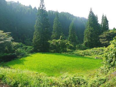 米作りの挑戦(2020) まもなく収穫!3年目の米作りは波乱もありながらなんとか順調?です!(前編)_a0254656_17571147.jpg