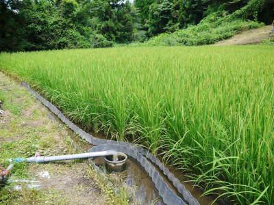 米作りの挑戦(2020) まもなく収穫!3年目の米作りは波乱もありながらなんとか順調?です!(前編)_a0254656_18010900.jpg