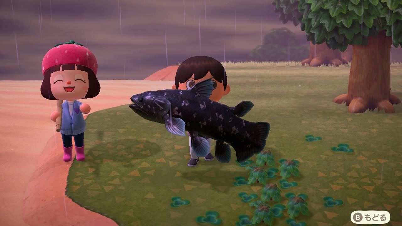 しか ない 魚 あつ 森 雨 の 釣れ 日
