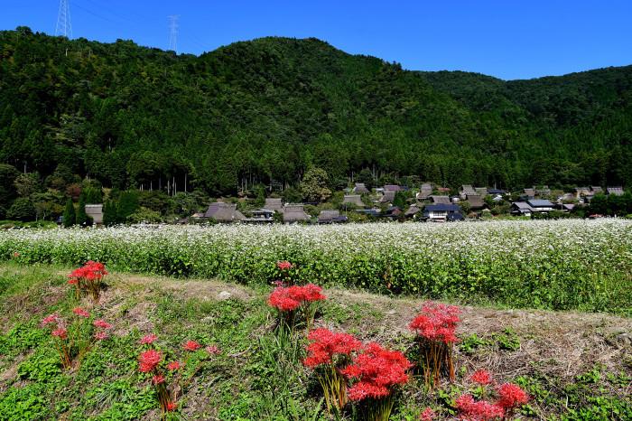 美山徘徊2020 秋の茅葺を見る1_f0374895_00003161.jpg