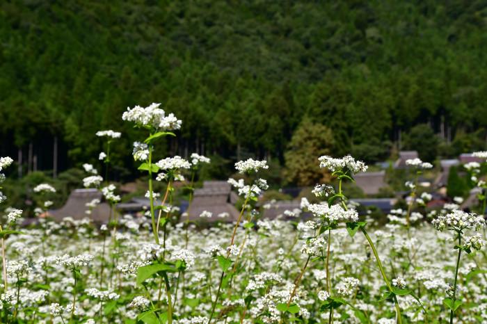 美山徘徊2020 秋の茅葺を見る1_f0374895_00013674.jpg