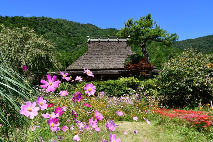 美山徘徊2020 秋の茅葺を見る2_f0374895_00232582.jpg