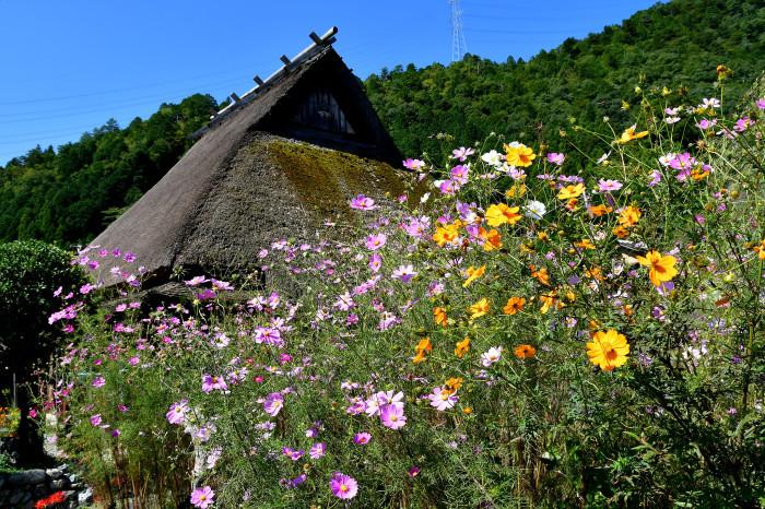 美山徘徊2020 秋の茅葺を見る2_f0374895_00235134.jpg