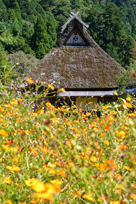 美山徘徊2020 秋の茅葺を見る2_f0374895_00254387.jpg