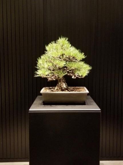 京都の旅_b0122805_15563871.jpg