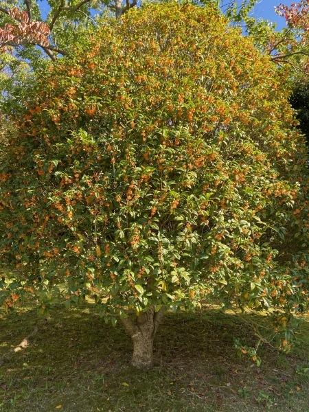 秋色を探して_a0224117_22090071.jpeg