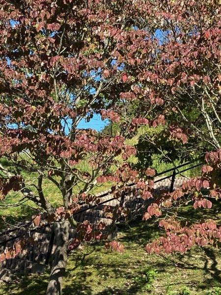 秋色を探して_a0224117_22131839.jpeg