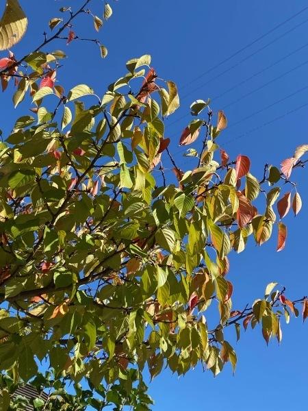 秋色を探して_a0224117_22140058.jpeg