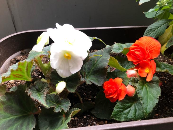 秋の庭_c0190424_16315797.jpg