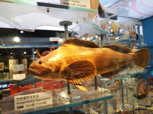 上野 Hard Rock CAFE~国立科学博物館_c0337631_18410786.jpg