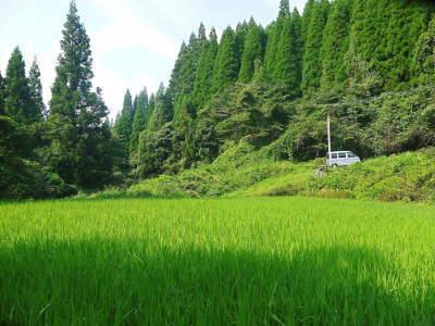 米作りの挑戦(2020) まもなく収穫!3年目の米作りは波乱もありながらなんとか順調?です!(後編)_a0254656_17323446.jpg