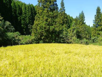 米作りの挑戦(2020) まもなく収穫!3年目の米作りは波乱もありながらなんとか順調?です!(後編)_a0254656_17400169.jpg