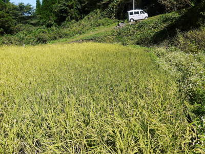 米作りの挑戦(2020) まもなく収穫!3年目の米作りは波乱もありながらなんとか順調?です!(後編)_a0254656_17420061.jpg
