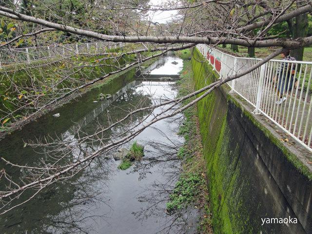 深秋の仙川沿いを歩く。_f0071480_16082148.jpg