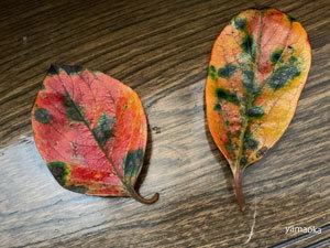 深秋の仙川沿いを歩く。_f0071480_16373283.jpg