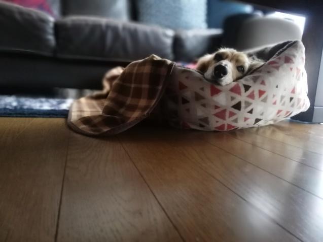 ぽちにベッドを買いました_e0385987_16053050.jpg