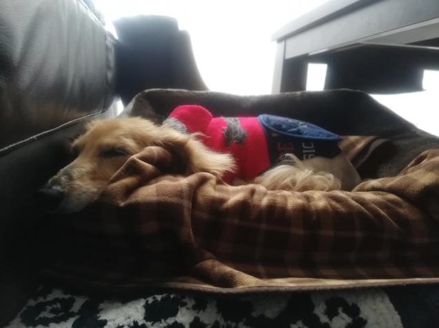 ぽちにベッドを買いました_e0385987_16063142.jpg