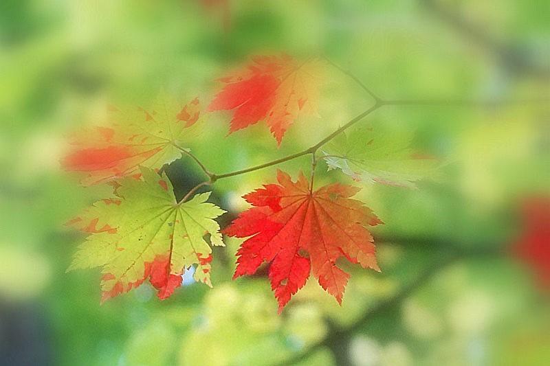 散歩中で紅葉探し_d0162994_12282157.jpg