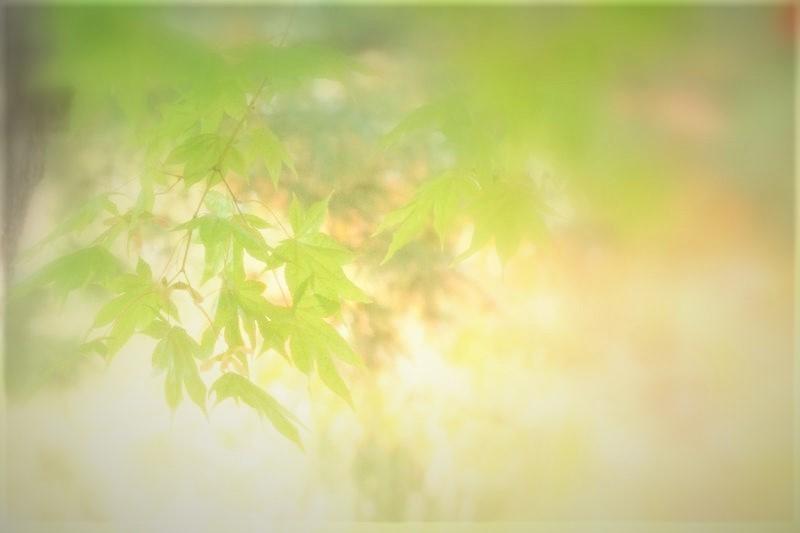 散歩中で紅葉探し_d0162994_12295796.jpg
