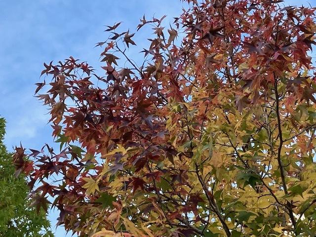 秋いろいろ… /  ten_d0135801_22471850.jpg