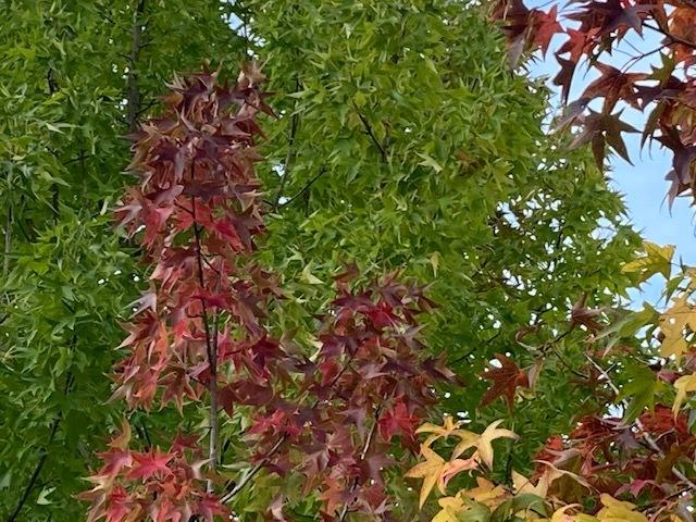 秋いろいろ… /  ten_d0135801_22472887.jpg