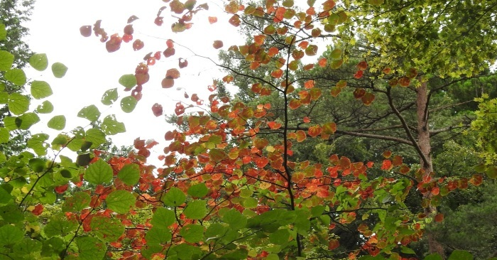 10月の日光植物園_e0034313_20384379.jpg