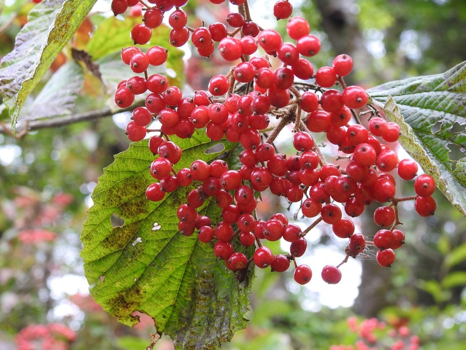 10月の日光植物園_e0034313_20405820.jpg