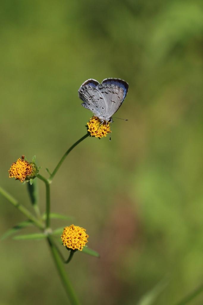 河原で見つけたキタキチョウの蛹ほか五目撮り_e0224357_20354795.jpg